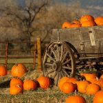 A Guide to South Jersey's Fall Festivals