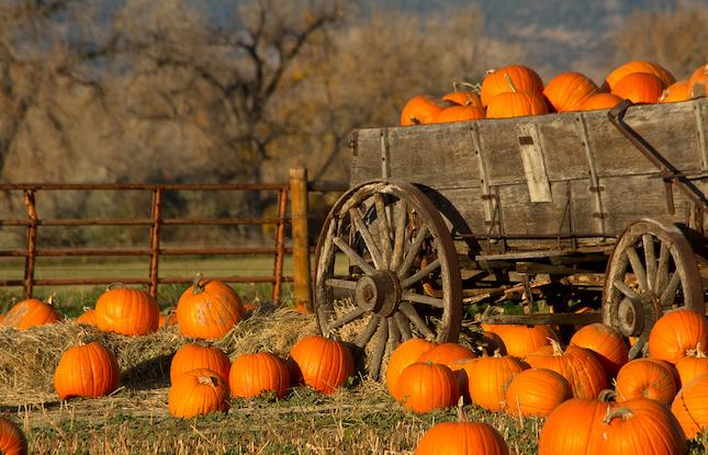 Read more about the article A Guide to South Jersey's Fall Festivals